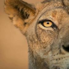 safari_odyssey_tours-1492945668706