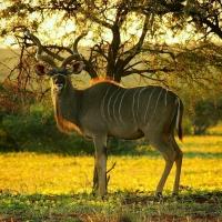 safari_odyssey_tours-1492945679232