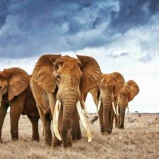 safariworxafrica-1492945540226