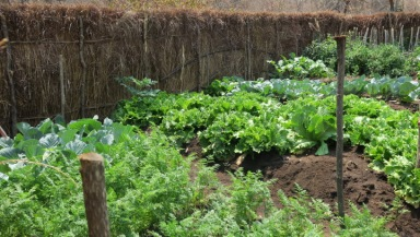 Fantastic vegetable garden