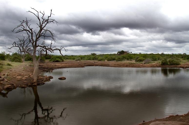 WaterholeLandscape
