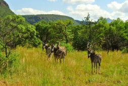 Bontle-Campsite-Marakele-National-Park-Limpopo-Province-South-Africa-23