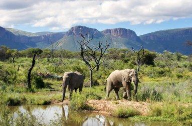 marataba-safari-lodge-game-drive-elephants-01-590x390