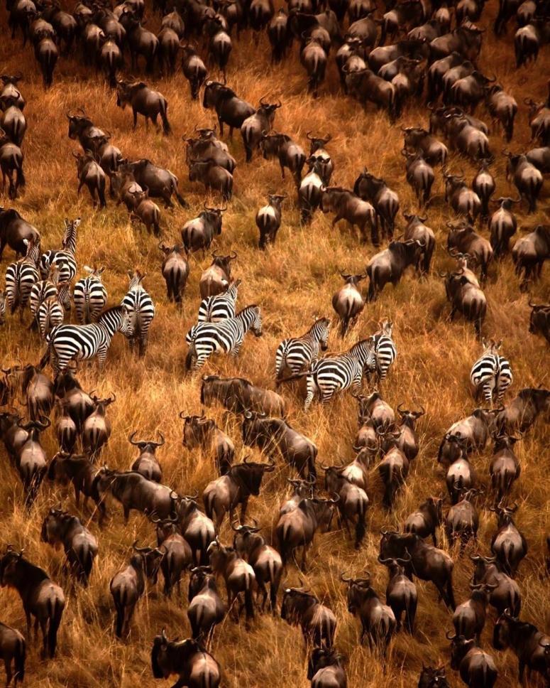 wildlife_by_essa-1548789203475
